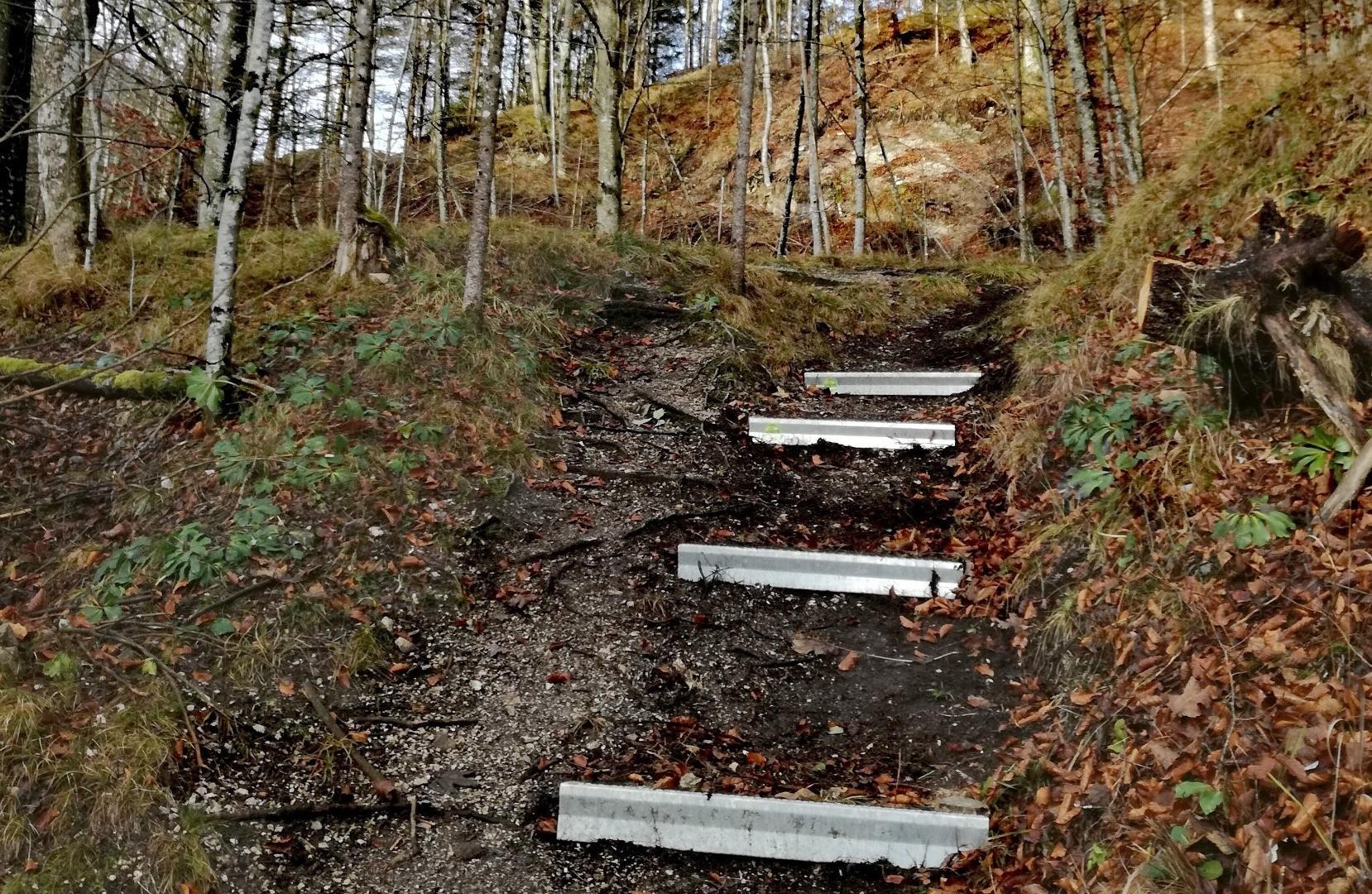 Wanderweg im Wald - Alpineisen Gams