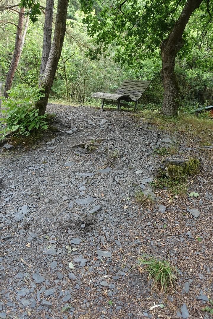 Pyrmonter Felsensteig ohne Alpineisen