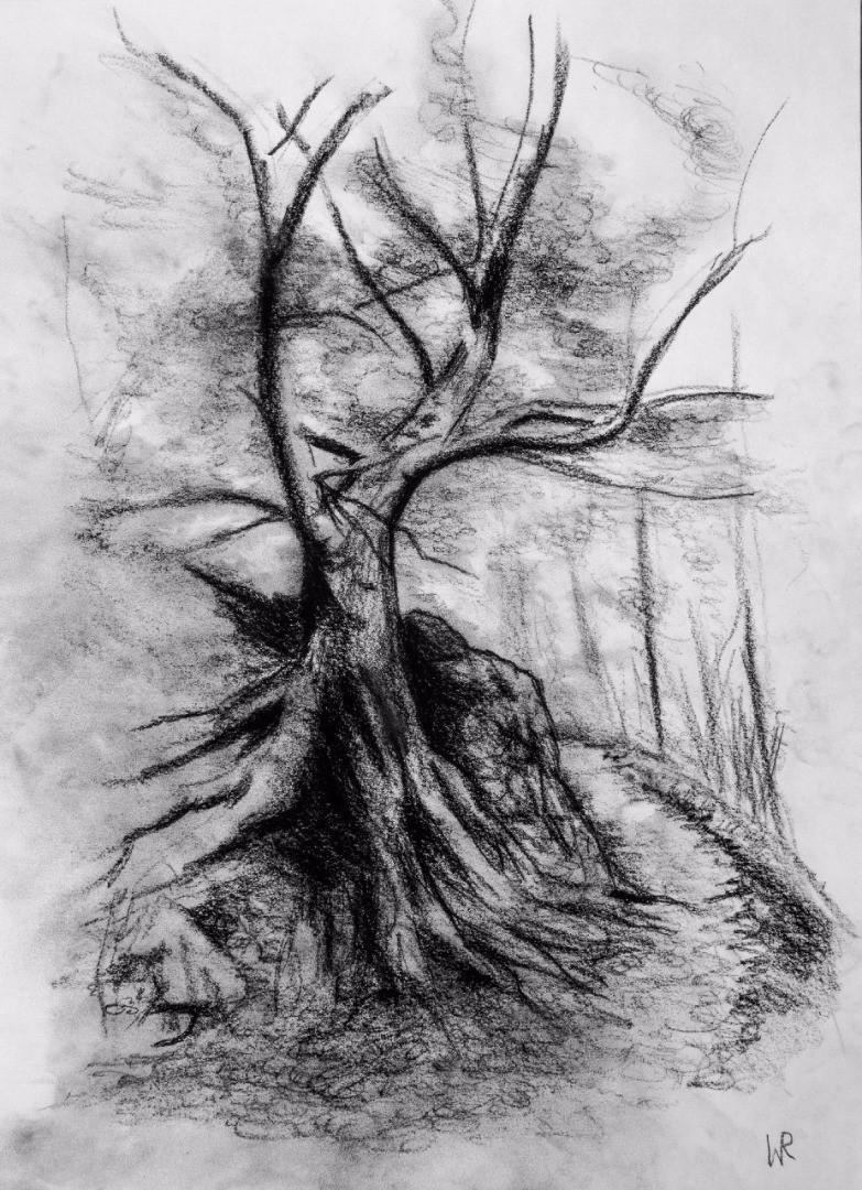 VuV_Buchenberg-Baum.jpg