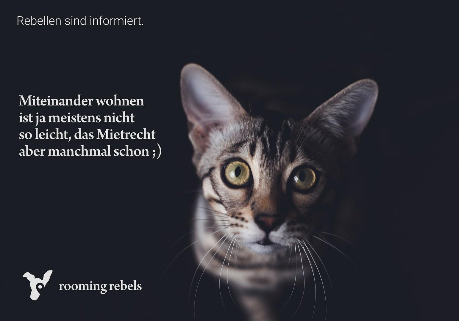rebellen-sind-informiert_mietrecht_2019.01.jpg