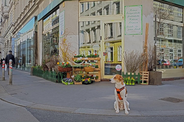 rooming-rebels_westbahnstraße_wien_vienna_2019_Blumen-Brigitte.jpg
