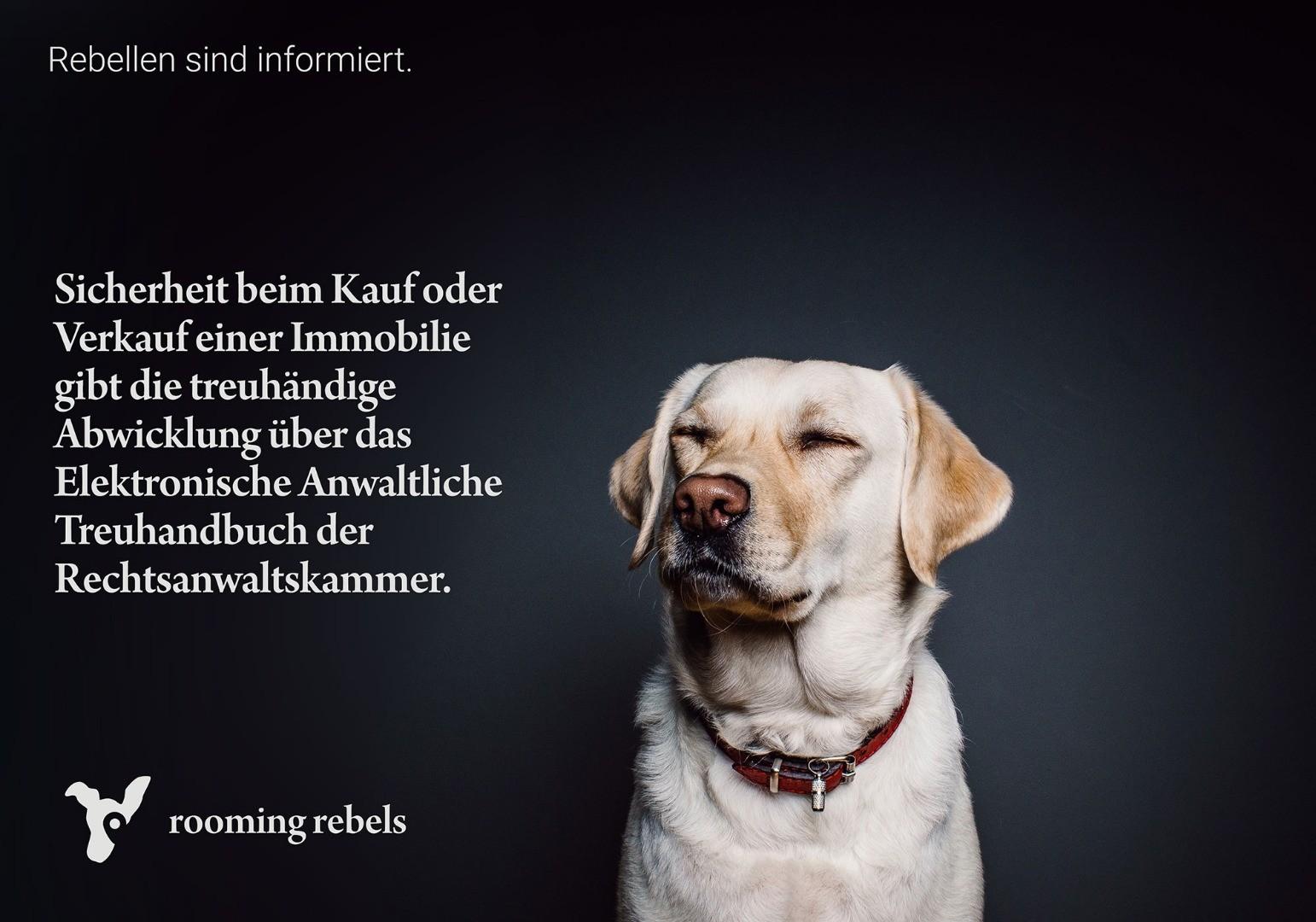 rebellen-sind-informiert_treuhandschaft_2019.01_.jpg