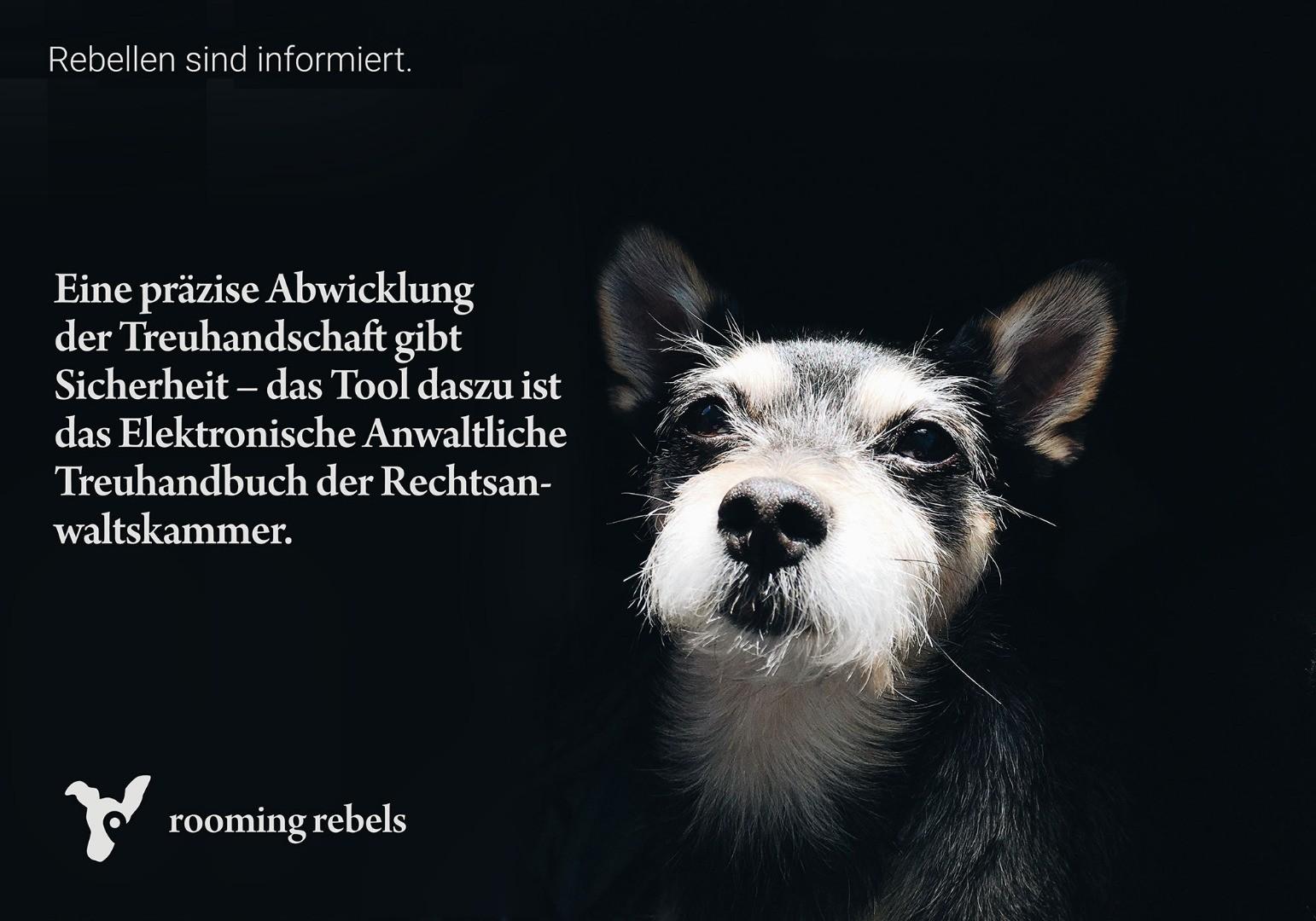 rebellen-sind-informiert_treuhandschaft_2019.02_.jpg