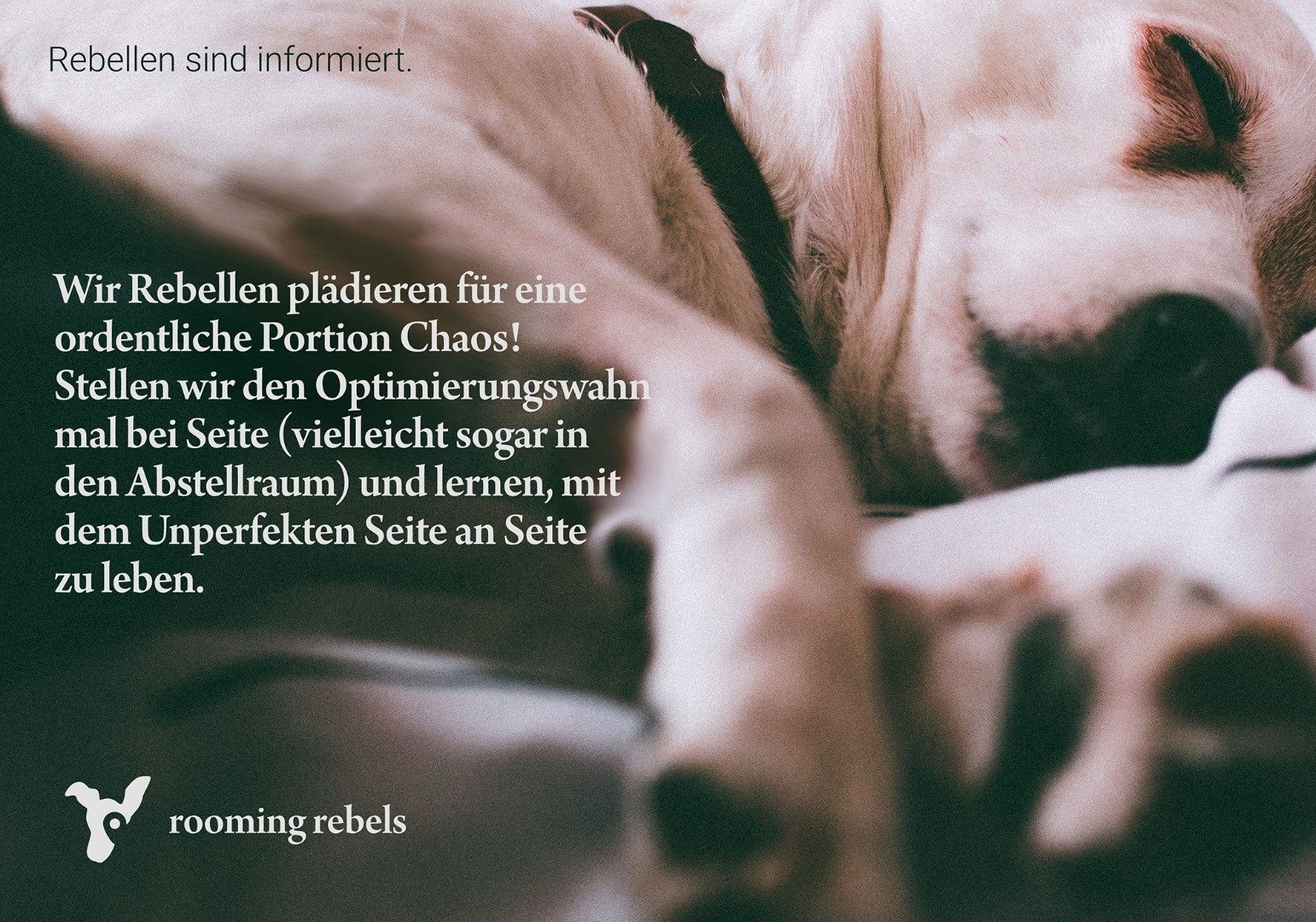 rebellen-sind-informiert_lebst-du-schon_b_2019_2000_.jpg