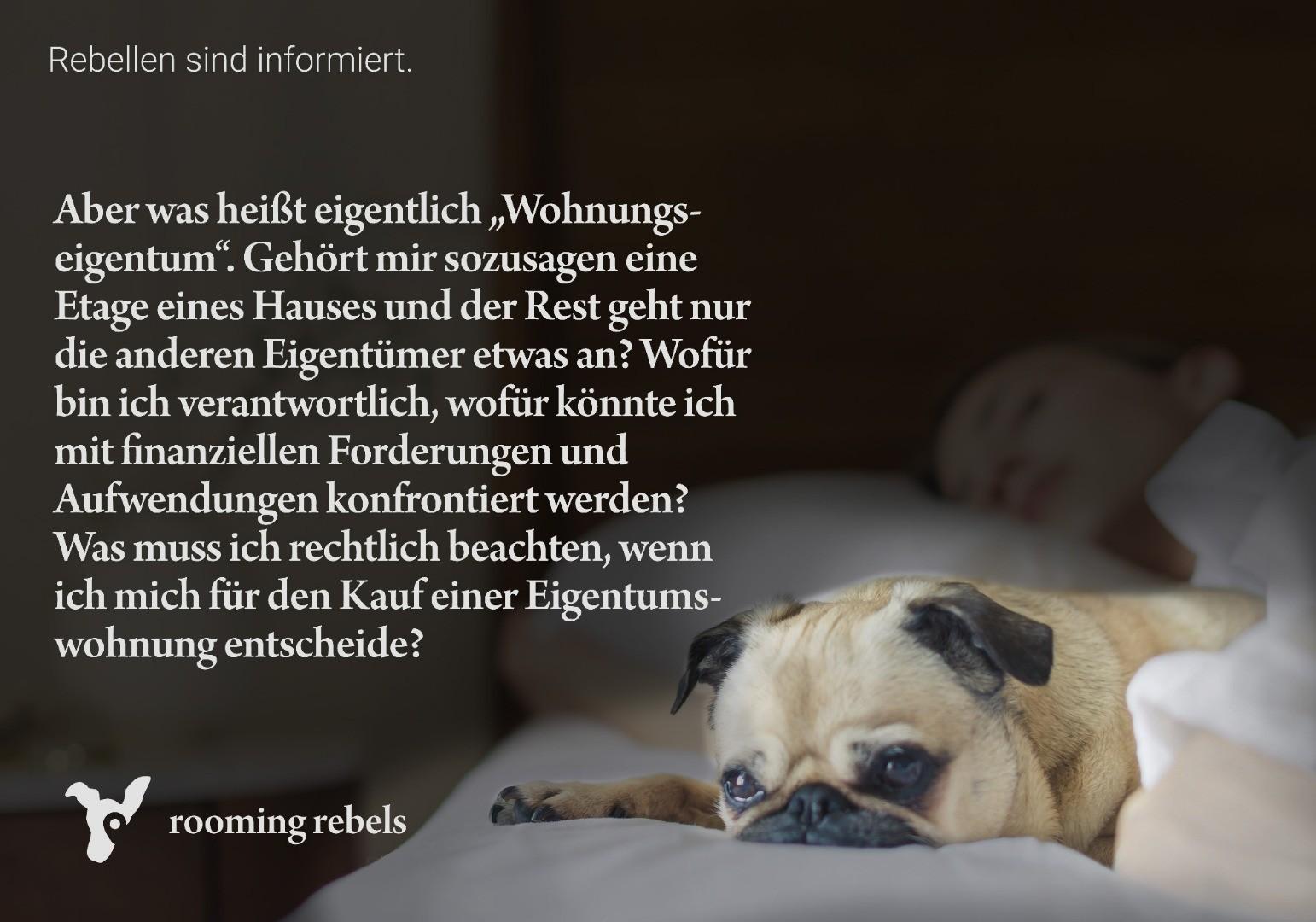 rebellen-sind-informiert_mietrecht_2019.02_a.jpg