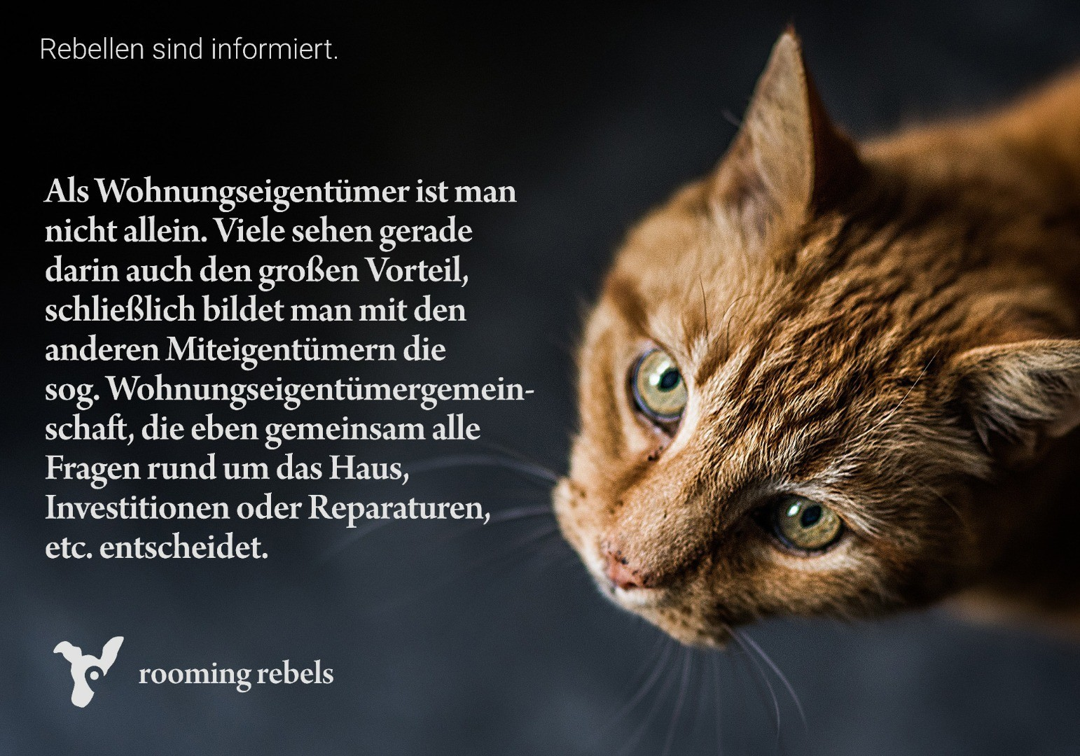 rebellen-sind-informiert_mietrecht_2019.02_c.jpg